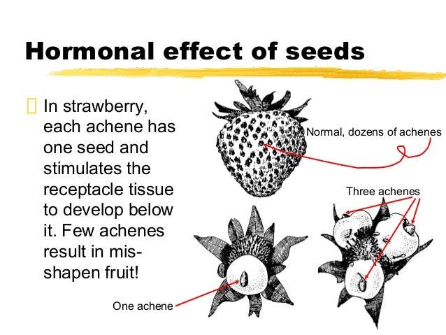 Fruits Development