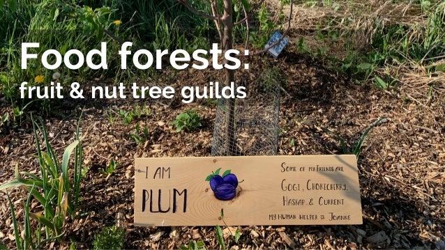 Food forests: fruit & nut tree guilds