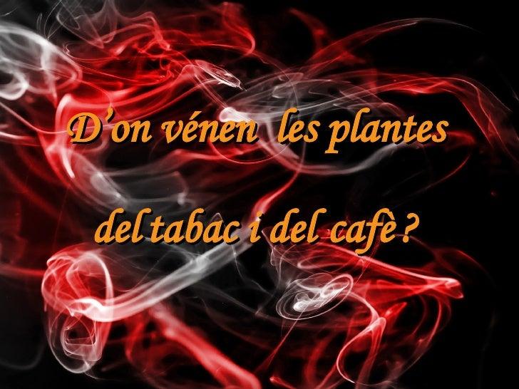 cafè tabac D'on vénen  les plantes del i del ?
