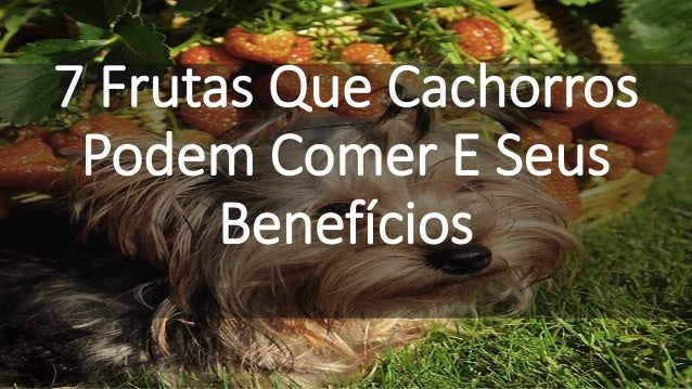 7 Frutas Que Cachorros Podem Comer E Seus Benefícios
