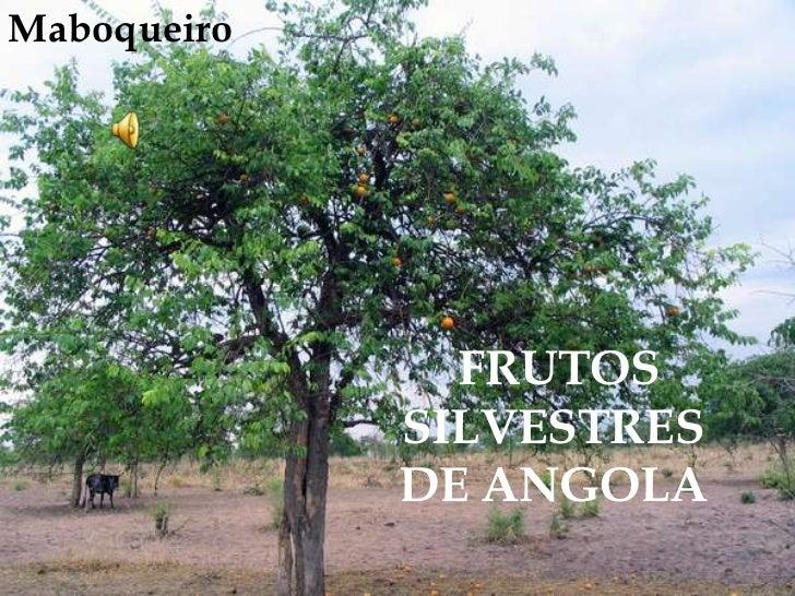 Maboqueiro<br /> FRUTOS SILVESTRES DE ANGOLA<br />