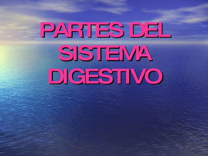 F:\Sistema Digestivo Diapositivas Slide 3