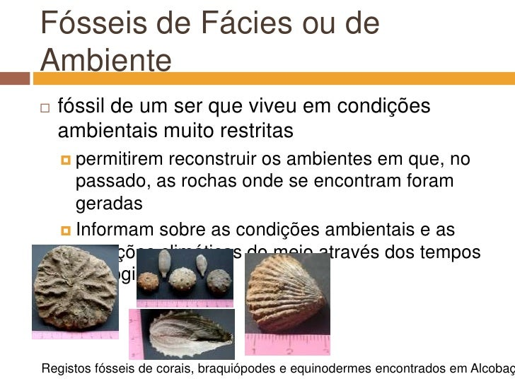 Fósseis de Fácies ou de Ambiente<br />fóssil de um ser que viveu em condições ambientais muito restritas<br />permitirem r...