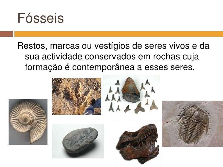 Fósseis<br />Restos, marcas ou vestígios de seres vivos e da sua actividade conservados em rochas cuja formação é contempo...