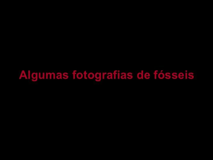 Algumas fotografias de fósseis