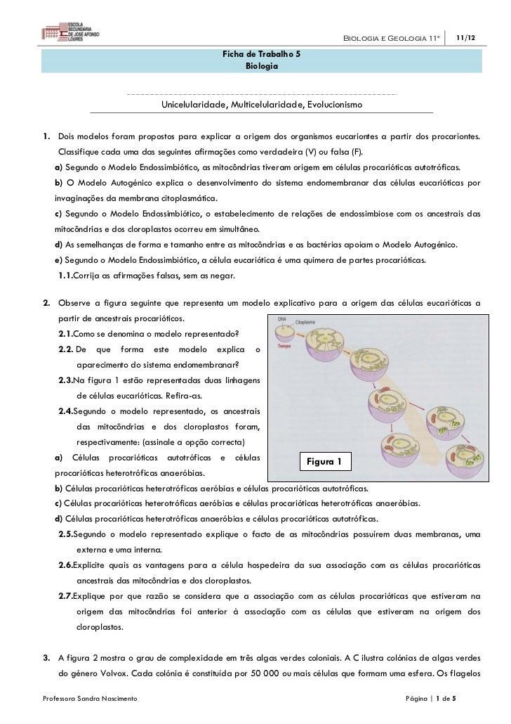 Biologia e Geologia 11º     11/12                                                    Ficha de Trabalho 5                  ...