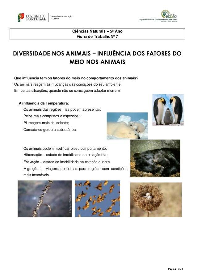 Ciências Naturais – 5º Ano Ficha de TrabalhoNº 7 DIVERSIDADE NOS ANIMAIS – INFLUÊNCIA DOS FATORES DO MEIO NOS ANIMAIS Que ...