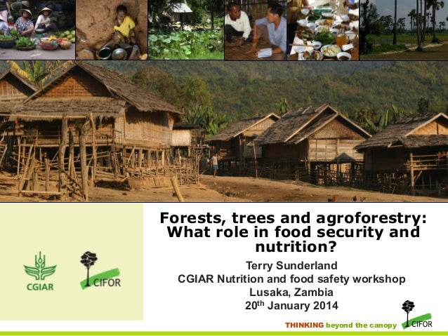 Forests, trees and agroforestry: What role in food security and nutrition? Terry Sunderland CGIAR Nutrition and food safet...
