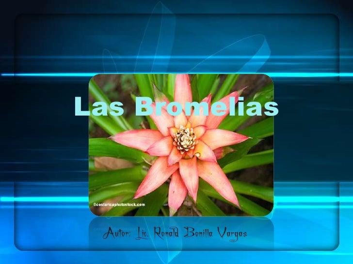 Las Bromelias Autor: Lic. Ronald Bonilla Vargas