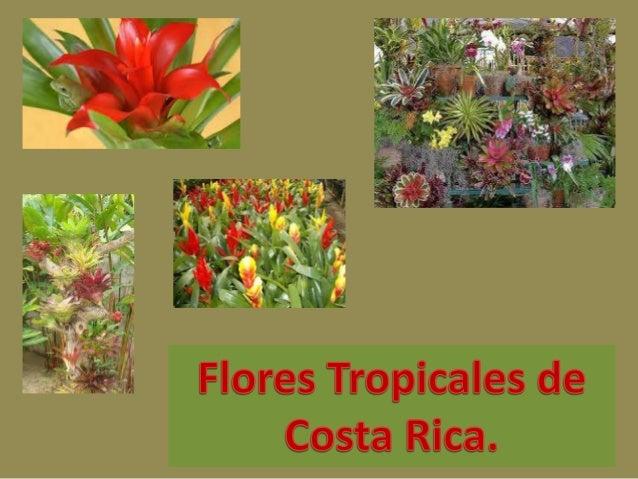 Las flores tropicales son encontradas en lugares húmedos en  todo lo largo de nuestro país.