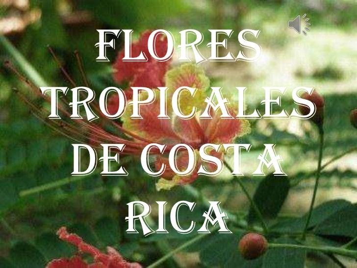 FLORESTROPICALES DE COSTA   RICA