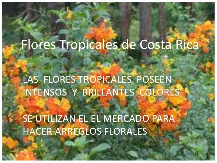 Flores Tropicales de Costa RicaLAS FLORES TROPICALES POSEENINTENSOS Y BRILLANTES COLORESSE UTILIZAN EL EL MERCADO PARAHACE...