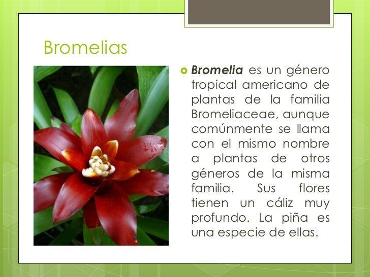 Flores tropicales de costa rica for 5 nombres de plantas ornamentales