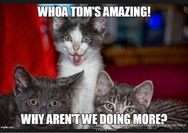 5 http://www.flickr.com/photos/21042103@N03/3136430416 / Funny Kitten