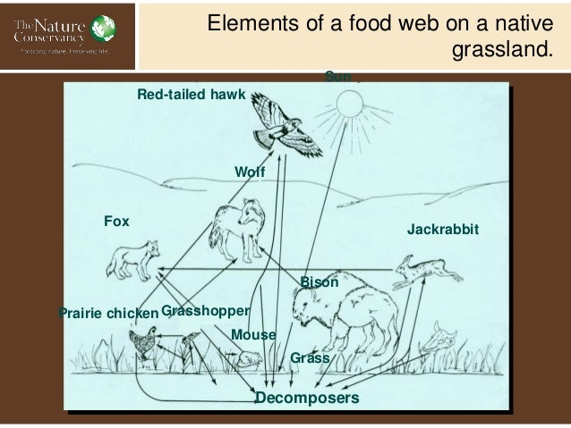 Biodiversity Putting Concept To Practive With Ecosystem Management