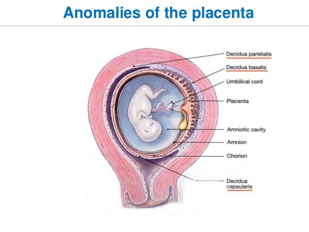Placenta: structure, development and function 50