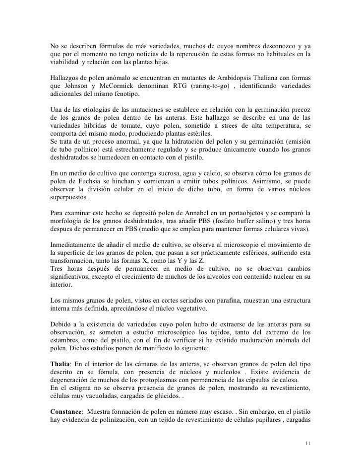 Fuchsias Estudios
