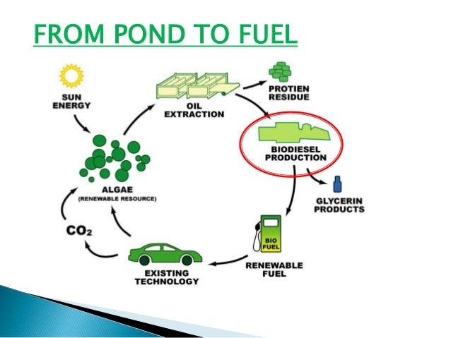 Fuel From Algae
