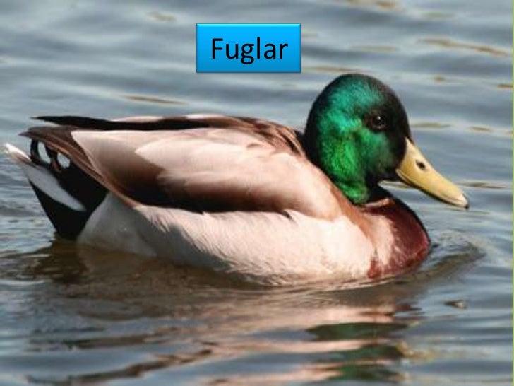 Fuglar<br />