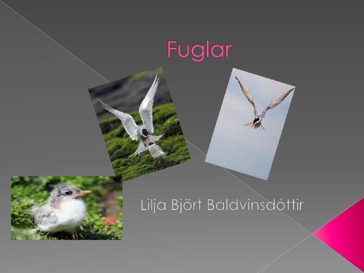 Fuglar<br />Lilja Björt Baldvinsdóttir <br />