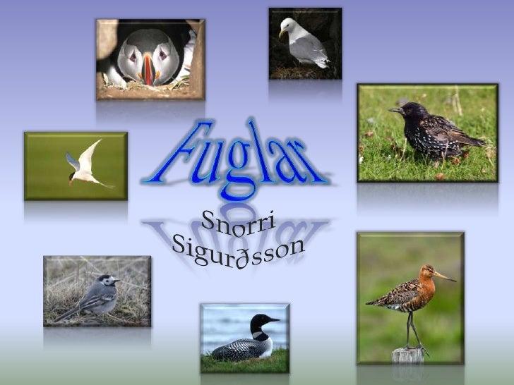 Fuglar<br />Snorri Sigurðsson<br />