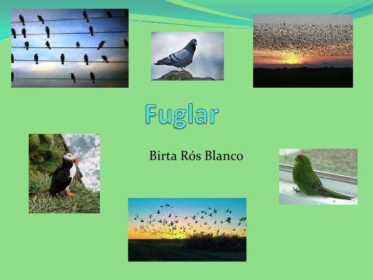 Birta Rós Blanco<br />Fuglar  <br />