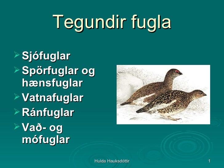 Tegundir fugla <ul><li>Sjófuglar </li></ul><ul><li>Spörfuglar og hænsfuglar </li></ul><ul><li>Vatnafuglar </li></ul><ul><l...