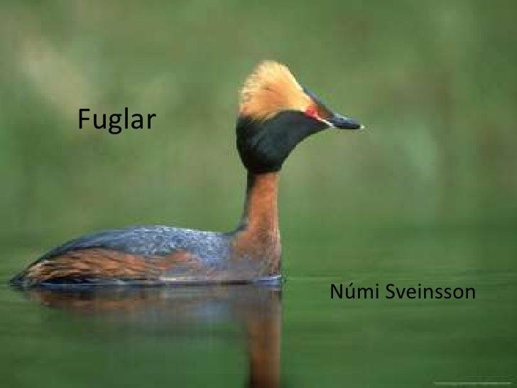 Fuglar<br />Númi Sveinsson<br />