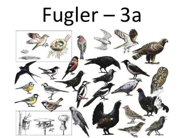 Fugler – 3a<br />