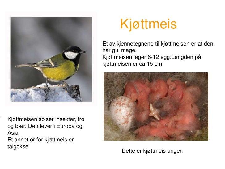 Fugler som lager reir i vegg