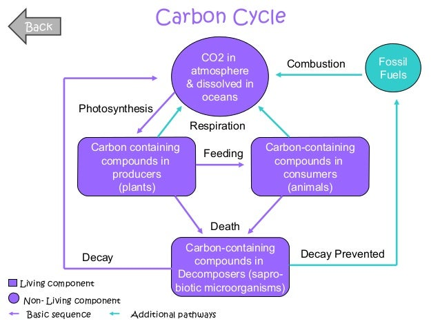 Carbon cycle diagram powerpoint online schematic diagram full biology unit 4 powerpoint rh slideshare net powerpoint cycle diagram vector communication cycle diagram ccuart Image collections