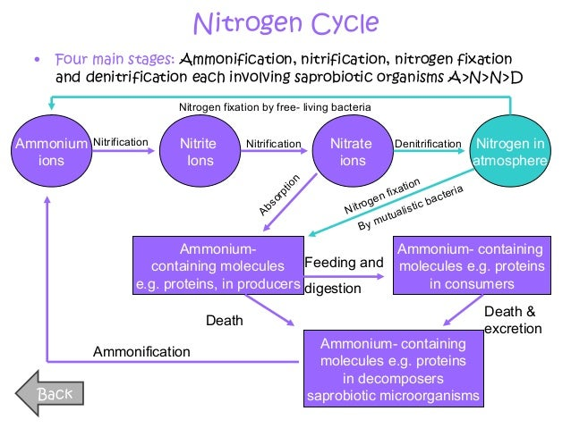 a2 biology essay cycles in biology Guidance and sample answers for a-level biology paper 3 essay.
