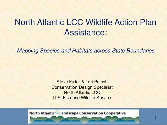 North Atlantic LCC Wildlife Action Plan Assistance: Mapping Species and Habitats across State Boundaries Steve Fuller & Lo...