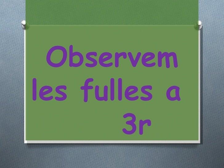 Observemles fulles a        3r
