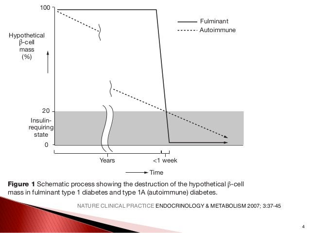 4 0 Hypothetical β-cell mass (%) Insulin- requiring state 100 20 <1 week Time Years Fulminant Autoimmune Figure 1 Schemati...