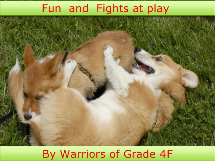 Fun and Fights at playBy Warriors of Grade 4F