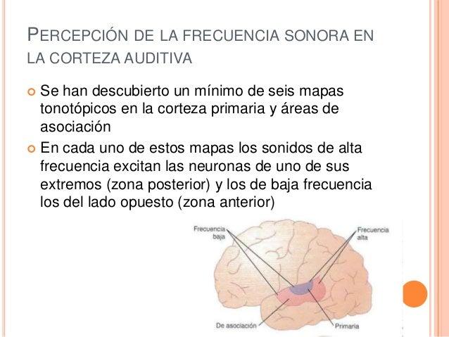 Funci 243 N De La Corteza Cerebral En La Audici 243 N