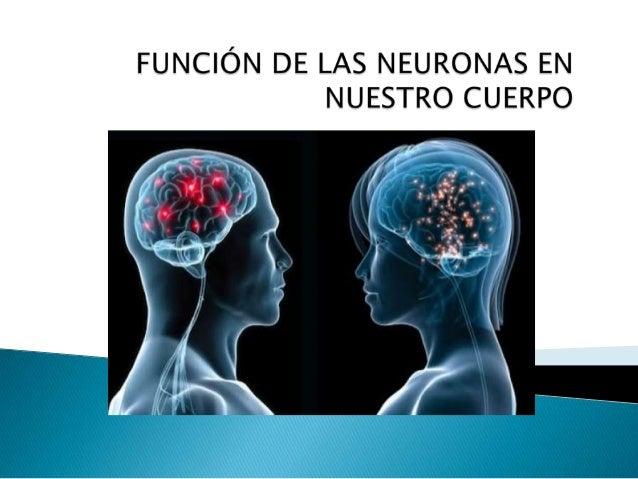       Son un tipo de células del sistema nervioso cuya principal función es la excitabilidad eléctrica de su membrana p...