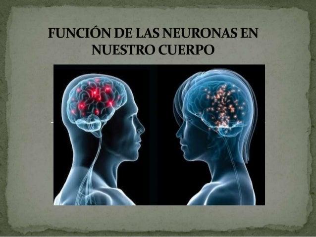  Son un tipo de células del sistema nervioso cuya principal función es la excitabilidad eléctrica de su membrana plasmáti...