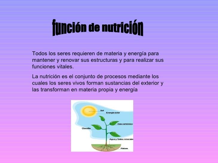 función de nutrición Todos los seres requieren de materia y energía para mantener y renovar sus estructuras y para realiza...
