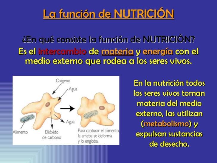 La función de NUTRICIÓN ¿En qué consiste la función de NUTRICIÓN? Es el  intercambio  de  materia  y  energía  con el medi...