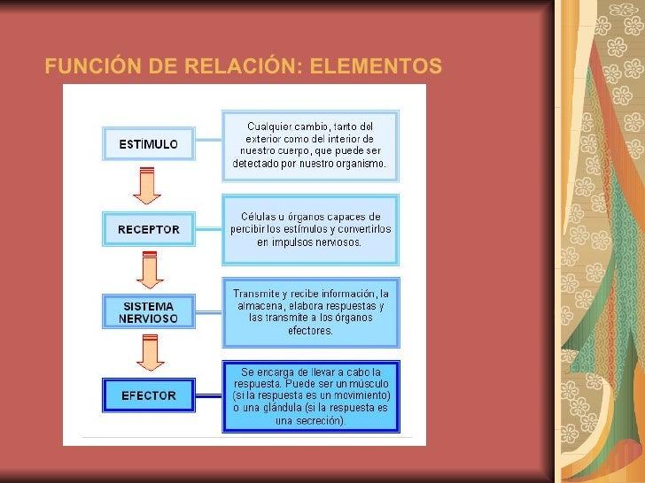 FUNCIÓN DE RELACIÓN: ELEMENTOS