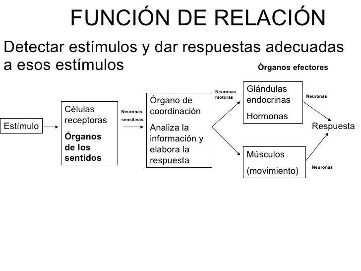Función de relación