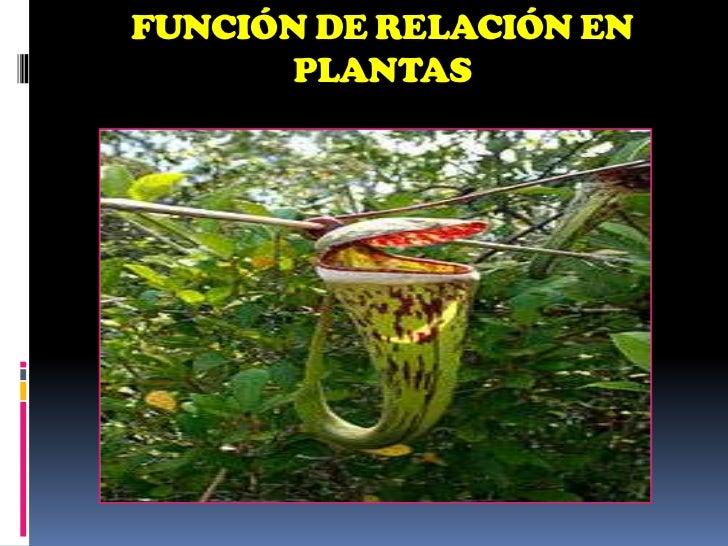 Funci n de relaci n i en los seres vivos for Hormonas en las plantas