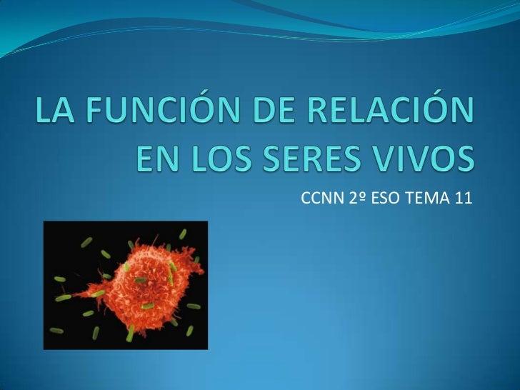 LA FUNCIÓN DE RELACIÓN EN LOS SERES VIVOS<br />CCNN 2º ESO TEMA 11<br />