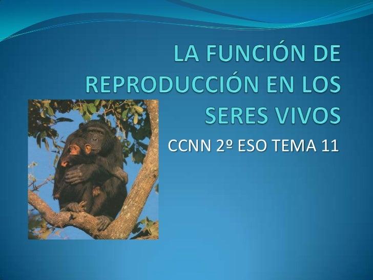 LA FUNCIÓN DE REPRODUCCIÓN EN LOS SERES VIVOS<br />CCNN 2º ESO TEMA 11<br />