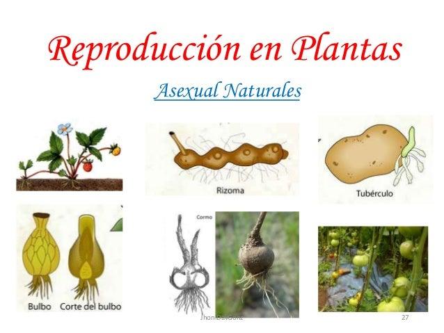 Tipos de reproduccion asexual en plantas natural