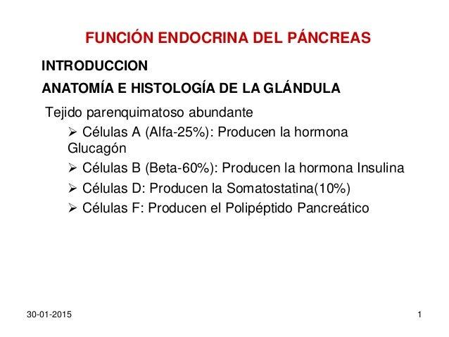 FUNCIÓN ENDOCRINA DEL PÁNCREAS Tejido parenquimatoso abundante  Células A (Alfa-25%): Producen la hormona Glucagón  Célu...