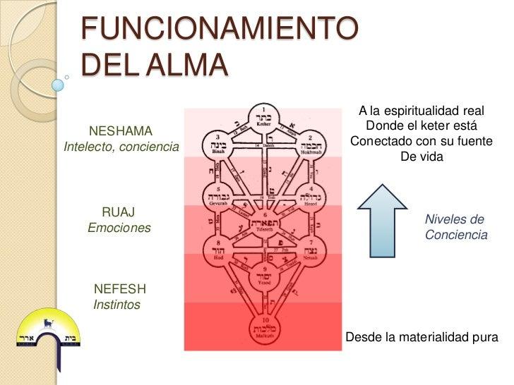 FUNCIONAMIENTO   DEL ALMA                         A la espiritualidad real     NESHAMA              Donde el keter estáInt...