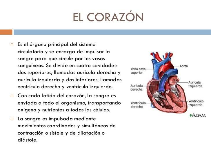 Movimientos Del Corazn | apexwallpapers.com